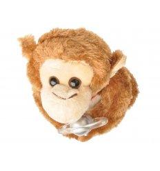 Śpiewająca małpka - zobacz film